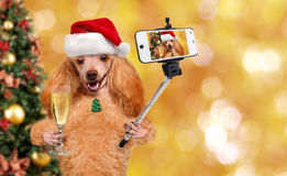 Dog in red Christmas hat taking a selfie together with a smartphone. Stock Photos