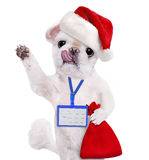 Dog in red Christmas hat wear blank white badge mockup . Stock Images