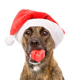 Dog with red christmas Santa hat and gift box. isolated on white Royalty Free Stock Photos