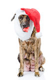 Dog with red christmas Santa hat and gift box. isolated on white Stock Images