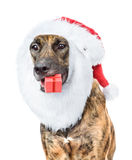 Dog with red christmas Santa hat and gift box. isolated on white Stock Photos