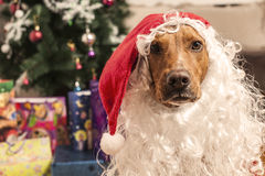 Dog in red christmas Santa hat Royalty Free Stock Photos