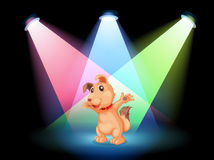 A dog with a red collar at the center of the stage Royalty Free Stock Photography