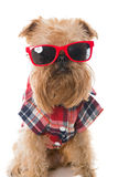 Dog in red glasses Royalty Free Stock Photo
