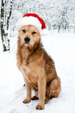 Dog in a red Santa hat. Stock Photo