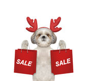 Dog with reindeer antlers holds up with shopping bag Stock Photos