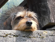 Dog relax Royalty Free Stock Images