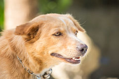 Dog relax action cute Royalty Free Stock Images