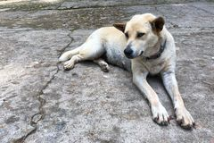 A dog relax on the cement floor Stock Photography