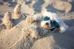 Dogs buried in the sand at the beach on summer vacation holidays Stock Photos