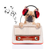 Dog   relax music Stock Photo