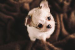 A dog relaxes in his bed.  royalty free stock photo