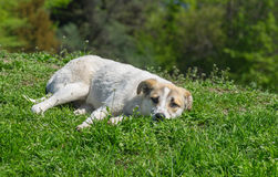 Dog relaxes under spring sun Stock Image