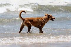 Dog relaxing. Beach theme: Dog relaxing on beach stock photo