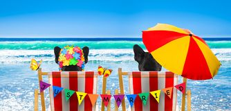 Dog relaxing on a beach chair. Dog resting and relaxing on a hammock or beach chair under umbrella at the beach ocean shore, on summer vacation holidays, just royalty free stock photo