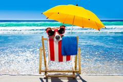 Dog relaxing on a beach chair. Jack russell dog resting and relaxing on a hammock or beach chair under umbrella at the beach ocean shore, on summer vacation stock photography