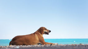 Dog relaxing at the beach Royalty Free Stock Image
