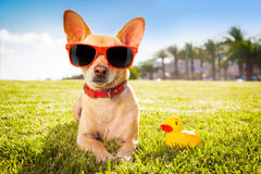 Dog relaxing on grass Stock Images