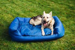 Dog relaxing on his bed, grass background Stock Photography