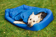 Dog relaxing on his bed, grass background Stock Images