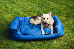 Dog relaxing on his bed, grass background Royalty Free Stock Photos