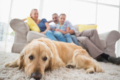 Dog relaxing on rug with family in background Royalty Free Stock Photo