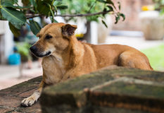 Dog relaxing under a tree. Candid dog relaxing under a tree royalty free stock image