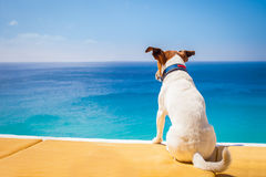 Dog relaxing Royalty Free Stock Photography