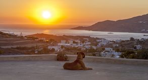 Dog relaxing Watching The Sunset. royalty free stock image
