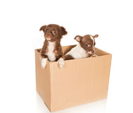 Dog relocation Stock Photo
