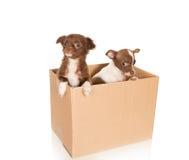 Dog relocation Stock Photo
