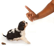 Dog reprimand Royalty Free Stock Photos