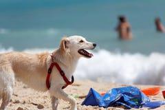 Dog rescue Royalty Free Stock Photos