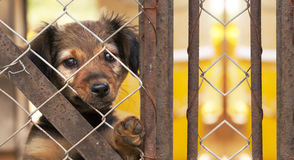 Dog rescue banner Stock Photography