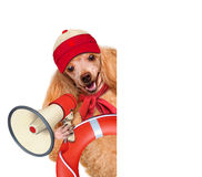 Dog rescuer Royalty Free Stock Photo