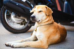 Dog rest on the road Royalty Free Stock Photo