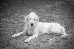Dog rest at roadside Royalty Free Stock Photo