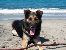 Dog Rested Stock Image