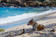Dog resting on beach Royalty Free Stock Photography