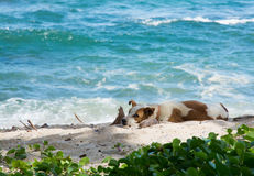 Dog resting on beach Royalty Free Stock Photos