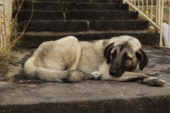 Dog resting beneath a staircase Royalty Free Stock Photo