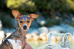 Dog resting on a boat in the summer Stock Photo