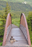 Dog resting on bridge Stock Images