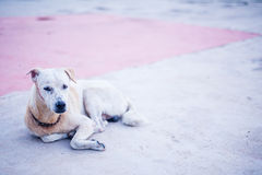 Dog resting on cement floor Stock Photo