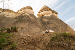 Dog resting among cliff formations Royalty Free Stock Photos