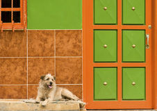 Dog Resting by Colorful Wall Royalty Free Stock Image
