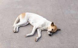 Dog resting on concrete road Stock Photo