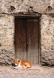 Dog resting in a doorway Stock Images