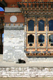 A dog is resting in front of one of the halls of a temple (Bhutan) Stock Image