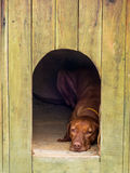Dog resting in his house. Stock Image